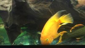 paroles fish for sale
