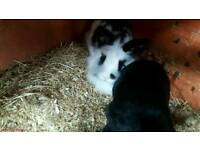 3 rabbits and 2 storey cage like new