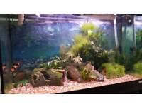 160l fish tank for sale