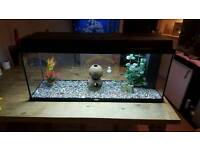 Jewel fish tank aquarium