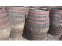 Oak whisky barrels water butts flower pots