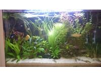 aquarium with cabinet and fish for sale