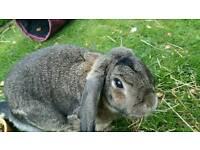 Rabbit, Guinea Pig & Hamster Boarding +Dog walking service in Bishopbriggs