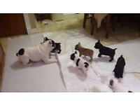 French Bulldog Pups *QUICK SALE NEEDED*