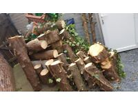 Pine wood small, medium logs for fire or diy