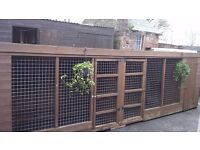 Double dog kennels with runs