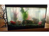 Fish tank ornaments and fish