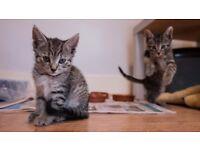 5 kittens needing good homes