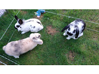 Rabbits and/or hutch