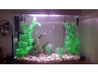 Aquarium with guppy fish
