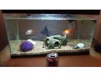 4 free goldfish
