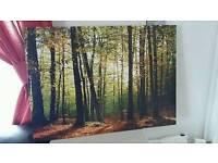 A woodland canvas
