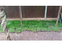 Lawn turf/grass from land scaping