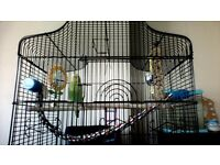 TAMED GREEN BUDGIE WITH CAGE AND TOYS ALSO WITH MILLIET AND FOOD