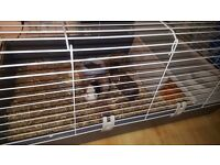 2 GUINEA PIGS WITH CAGE AND ALL NECESSARY SUPPLIES