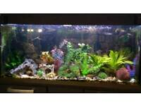 Large fish tank, inc all accessories and fish