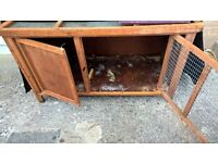 FREE guinea pig hutch, cover and small cage