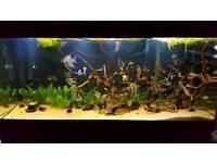 5x2x2foot 520l fish tank, aquarium
