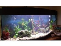 Tropical Fish Tank with Fishes and Accessories