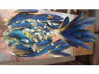 Blue n gold feathers