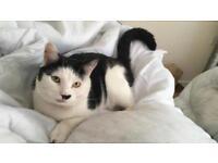 Reward Lost Cat Aylsham Area