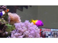 marine aquarium !!!(aquarium, fish, coral)... low price!!!