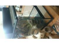 Full gecko set up