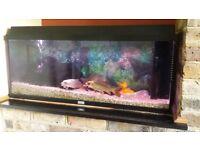Jewel Fisy tank 120l