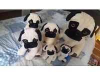 6 teddy bear pugs (dogs)
