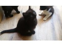 Adorable kittens reafy to go to loving new homes
