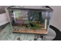 small tropical fish tank and 2 fish