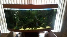 Juwel vision 260 litre fish tank and cabinet