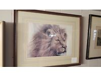 Large Framed Print of Painting of Lion