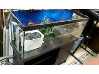 Glass Fish Tank on Wood Stand
