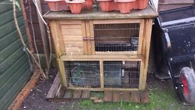 Large, outdoor guinea pig / rabbit / small animal hutch / cage