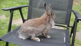 Lots of beautiful rabbits for sale ready now.