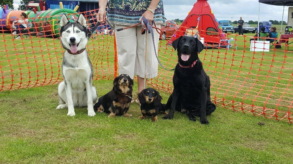 Fun Dog Show @ Rudham Village Fete
