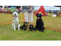 Fun Dog Show @ Rudham Village Fete