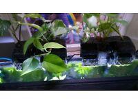External HOB filters for fishtanks