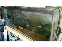 4ft fish tank and accessories