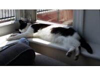 11 year old cat to rehome. An affectionate and quiet natured cat in need of a new home.