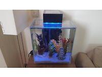 64L Fluval Edge Aquarium & Accessories / Fish Tank. £100.
