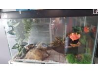 2x leopards and tank for sale