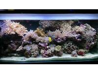 2 Marine Aquariums complete on one system.
