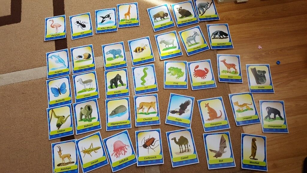 Zoo Am I Game | in St Ives, Cambridgeshire | Gumtree