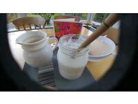 Kefir Grains for milk - free