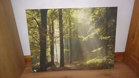 Forrest canvas