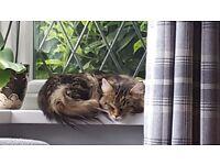 MISSING - CAT MISSING FROM JESMOND