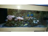 Full marine set up and livestock for sale