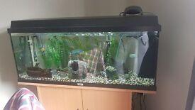 Fish tank for swaps
